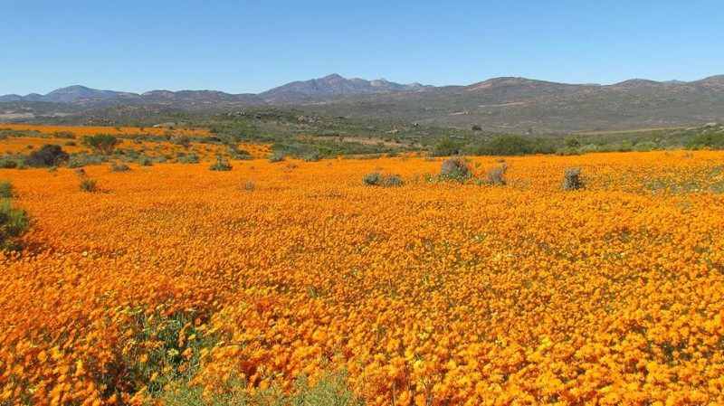 Namaqua-Flower-Camps-3