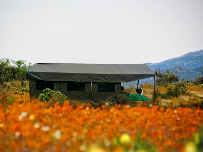 Namaqua-Flowers-Camps-6